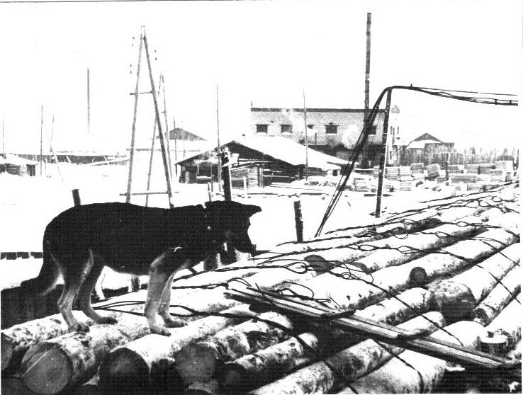 Вятка нижний турунью колония видео фото 198-880