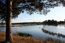 Верхосунье, местный пруд, река Суна, осень (автор фото Екатерина Нелюбина)