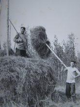 1962 год. Сенокос на болоте Чистое.  Перминов Федор Иванович с сыном Аркадием - фото из архива Дементьевой Т.Г.