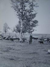 1960-е г.г. За д. Новогуляевской. За околицей - Нижегородская область - фото из архива Дементьевой Т.Г.