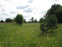 Дорога по деревне, центральная часть деревни, вид на юг. Фот Лысов Д.С. 21.07.14