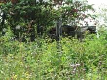 Развалины дома, центральная часть деревни, вид на запад от дороги. Фот Лысов Д.С. 21.07.14