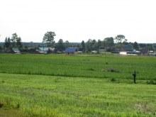 Деревня со стороны д. Нагоряна. Фот. Лысов Д.С. 29.07.14