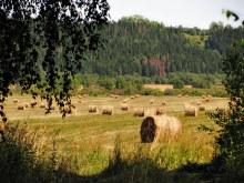 Луга внизу  деревни.