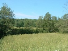 д.Заплатники, на правом берегу Заплатнинский березник.