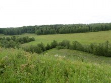Березник около деревни. Вид от д.Вычегжаны.