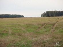 Место, где была д. Кожины. Фото Ваганова Владимира.