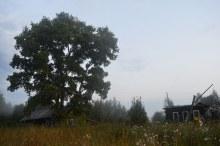 д.Робяши, август 2018, крайние дома со стороны дороги